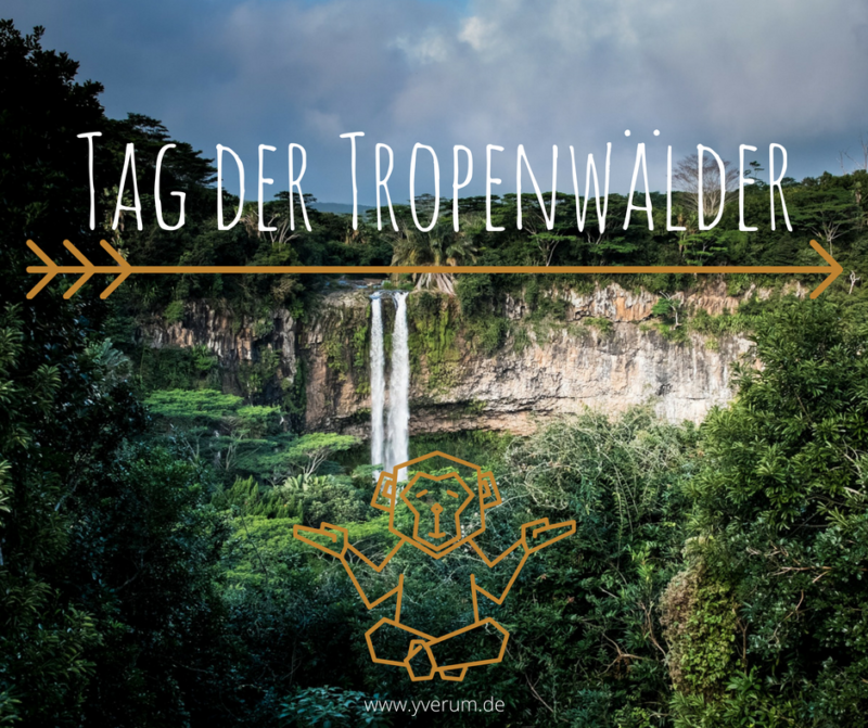 naturschutz-tropenwald-yverum-blog