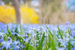 yverum-naturkosmetik-nature-flowers